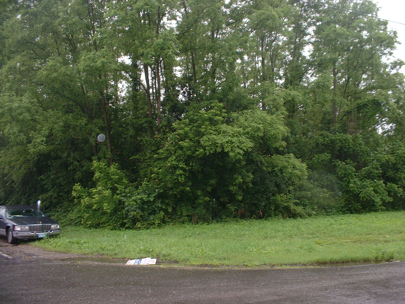 This picture from the center of the street shows the beautifully wooded lot.